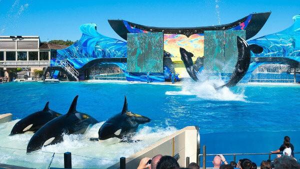Exhibición de Orcas