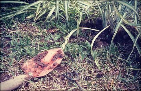 Regar las plantas o trabajar en el jardín es una de esas actividades que puedes hacer con unos minutos al día, ridículamente simple y sólo así tendrás resultados :)